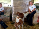Weekend of fun at the Hawaii State Farm Fair via @hawaiinewsnow