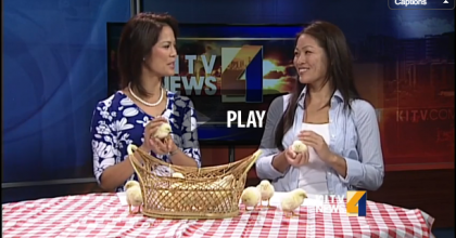 Asagi Hatchery talks with @KITV4 about raising chickens.